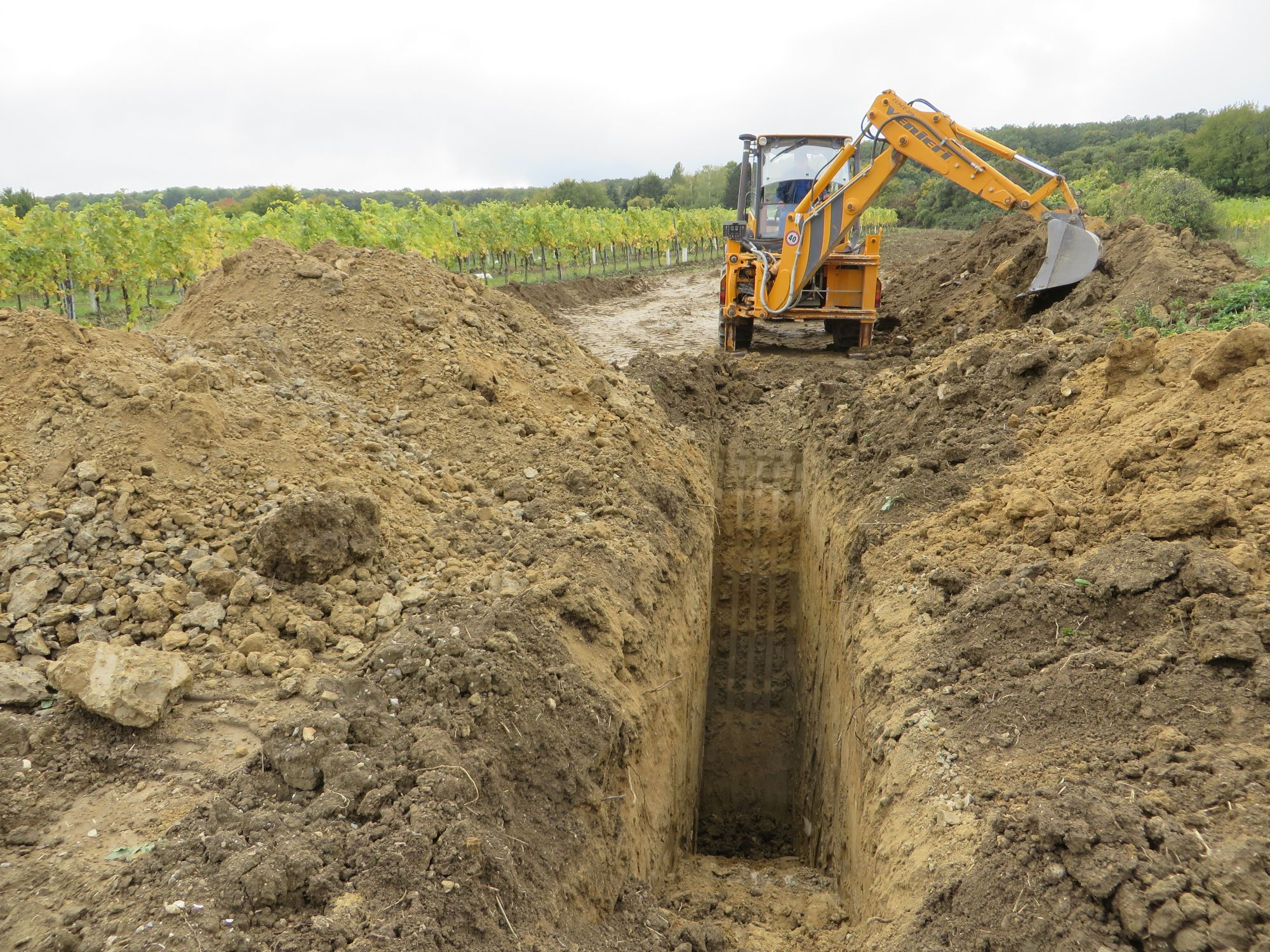 Grabung Gainfarn 2019, Grabung Gainfarn, Profilkünette (c) Gerhard Wanzenböck